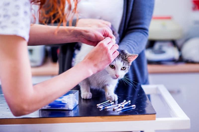 Auxiliaire de Santé Animale avec un chat