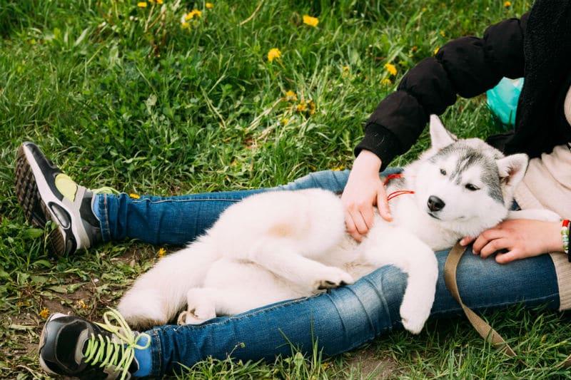 Comportementaliste pour chiens