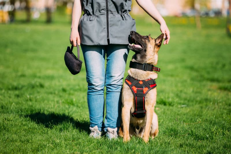 Dresseur de chien en tenue