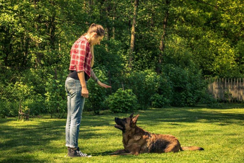 Éducateur canin qui donne un ordre à un chien