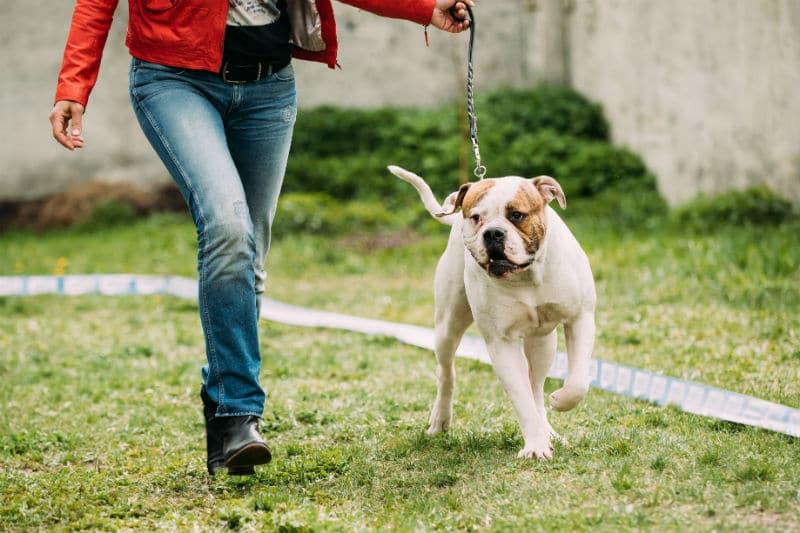Éducateur de chien en plein travail
