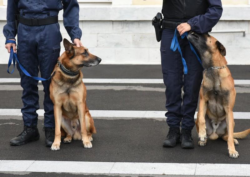 Maîtres Chiens de la Police Nationale